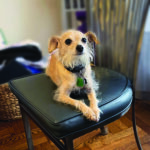 Sponsor Pet Chachi