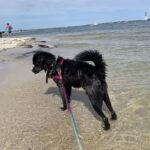 sponsor-pet-priscilla-beach-122920a