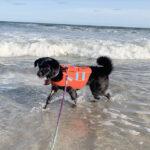 sponsor-pet-priscilla-beach-122920b