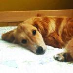 sponsor-pet-strider-052621