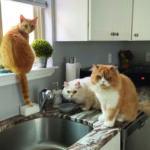 sponsor-pet-tobias-052621b